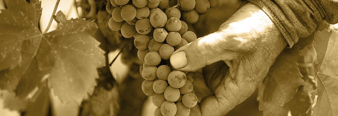 mani uva cantina trexenta