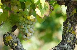 vitigno nuragus